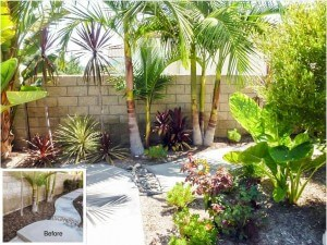 Coto de Caza Tropical Plant Overhaul