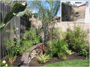 San Juan Capistrano Tropical Plant Transformation